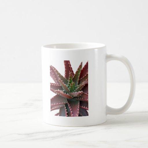 Red-Green Aloe 6 Mugs