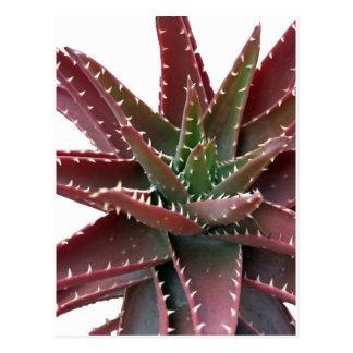 Red-Green Aloe 6 Postcard