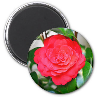 Red green leaf Camellia flower close-up 2 Inch Round Magnet