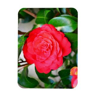 Red green leaf Camellia flower close-up Rectangular Photo Magnet
