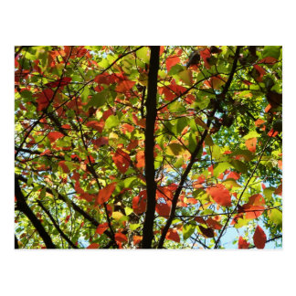 Red & Green leaves Postcard