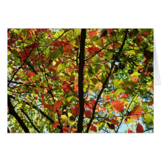 Red & Green Tree Card