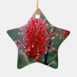 Red Grevillea Ornament