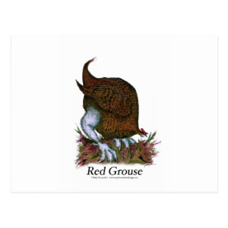 Red Grouse bird, tony fernandes Postcard