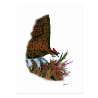 red grouse, tony fernandes postcard