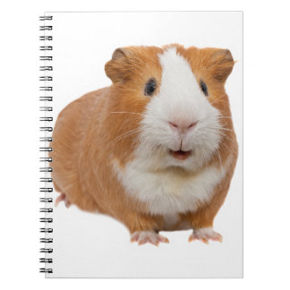 red guinea pig notebook