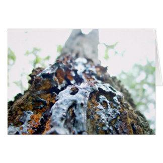 Red gum bark closeup greeting cards