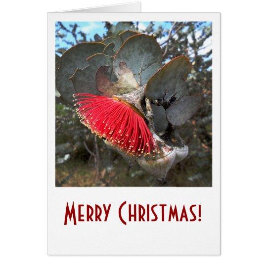 Red Gum Flower Christmas Card