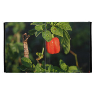 red habanerno hot pepper against leaves iPad folio cases