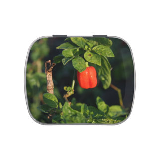 red habanerno hot pepper against leaves jelly belly tins