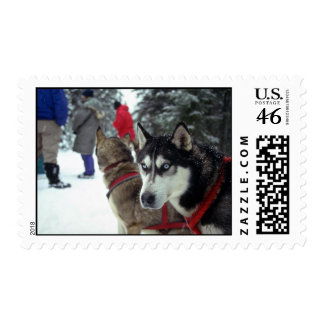 Red harnesses stamp
