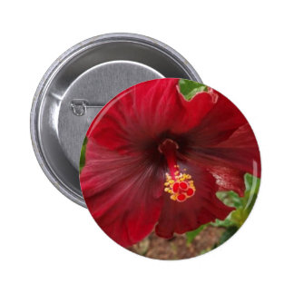 red hawaii hibiscus plant pinback button