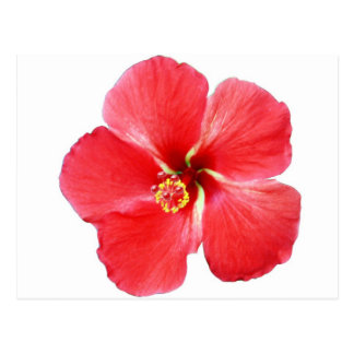 Red Hawaiian Hibiscus Flower Postcard