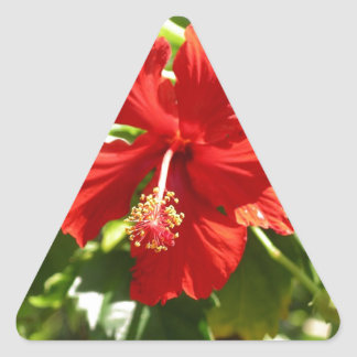 Red Hawaiian Hibiscus Flower Triangle Sticker
