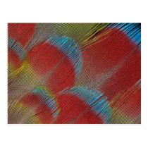 Red Hawk-Headed Parrot Feathers Postcard