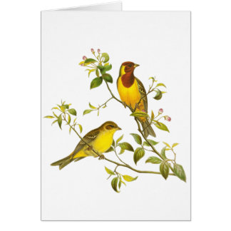 Red-headed Bunting Card