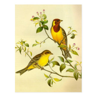 Red-headed Bunting Emberiza bruniceps Post Cards
