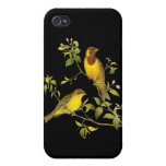 Red-Headed Bunting iPhone 4/4S Covers