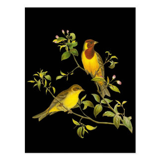 Red-headed Bunting Postcard