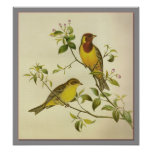 Red-headed Bunting Posters