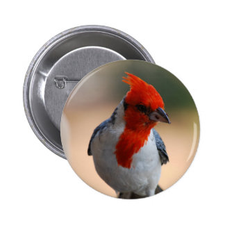 Red Headed Cardinal Button