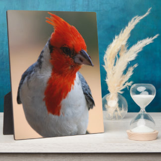Red Headed Cardinal Plaque