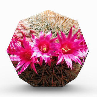 Red Headed Irishman Cactus, Customizable! Acrylic Award