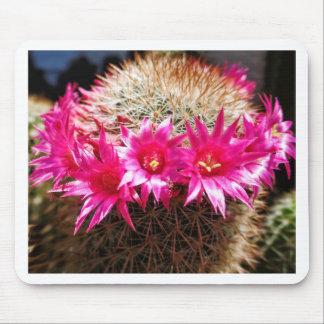 Red Headed Irishman Cactus, Customizable! Mouse Pad