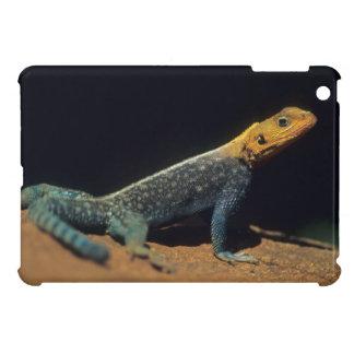 Red-Headed Rock Agama Lizard, El Kerama Ranch Case For The iPad Mini