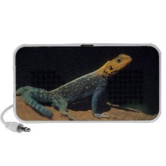 Red-Headed Rock Agama Lizard, El Kerama Ranch Mini Speaker