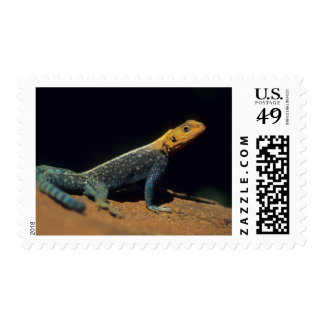 Red-Headed Rock Agama Lizard, El Kerama Ranch Stamp