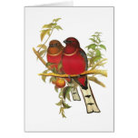 Red-headed Trogon Greeting Cards