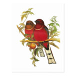 Red-headed Trogon Post Cards