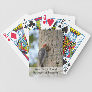 red headed woodpecker bird lookin in palm tree bicycle playing cards