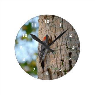 red headed woodpecker bird lookin in palm tree round clock