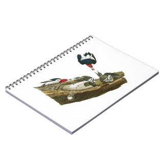 Red headed Woodpecker John Audubon Birds America Notebook