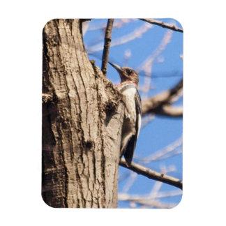 Red-headed Woodpecker Magnet