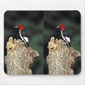 Red-headed woodpecker mouse pad