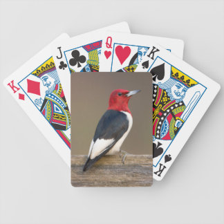 Red-headed Woodpecker on fence Bicycle Playing Cards
