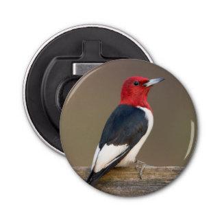 Red-headed Woodpecker on fence Bottle Opener