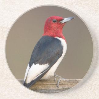 Red-headed Woodpecker on fence Drink Coaster