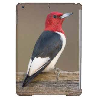 Red-headed Woodpecker on fence iPad Air Cases