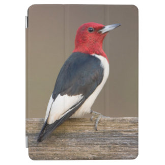 Red-headed Woodpecker on fence iPad Air Cover