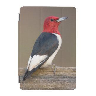 Red-headed Woodpecker on fence iPad Mini Cover