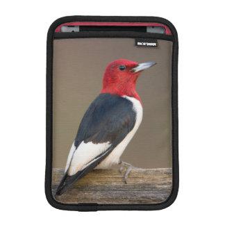 Red-headed Woodpecker on fence iPad Mini Sleeve