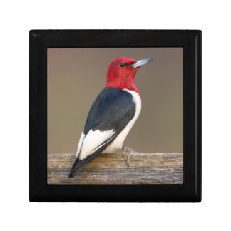 Red-headed Woodpecker on fence Jewelry Box