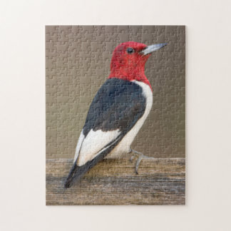 Red-headed Woodpecker on fence Jigsaw Puzzle