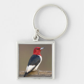 Red-headed Woodpecker on fence Silver-Colored Square Keychain