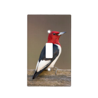 Red-headed Woodpecker on fence Light Switch Cover