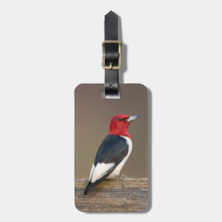Red-headed Woodpecker on fence Luggage Tag